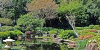 An Evening ina Japanese Garden